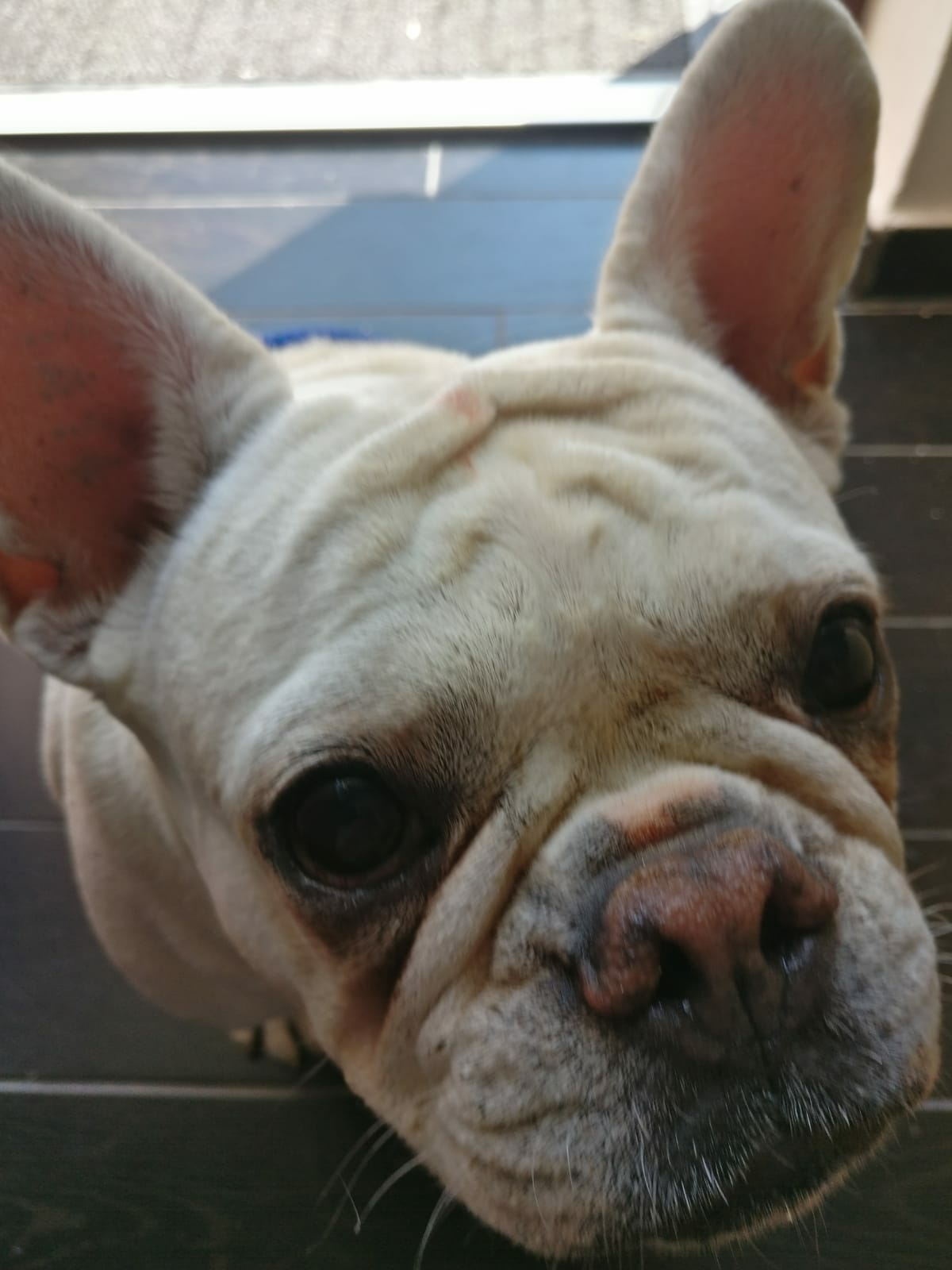 dog wants cbd treat