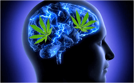 CBD's effect on the mind.