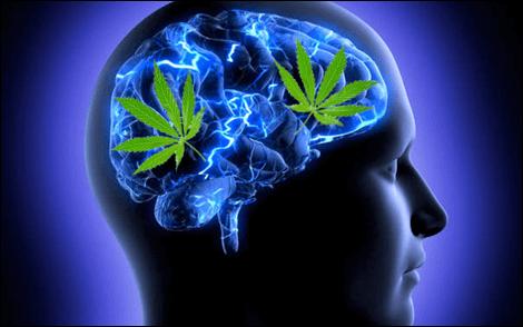 CBD's effect on the mind.