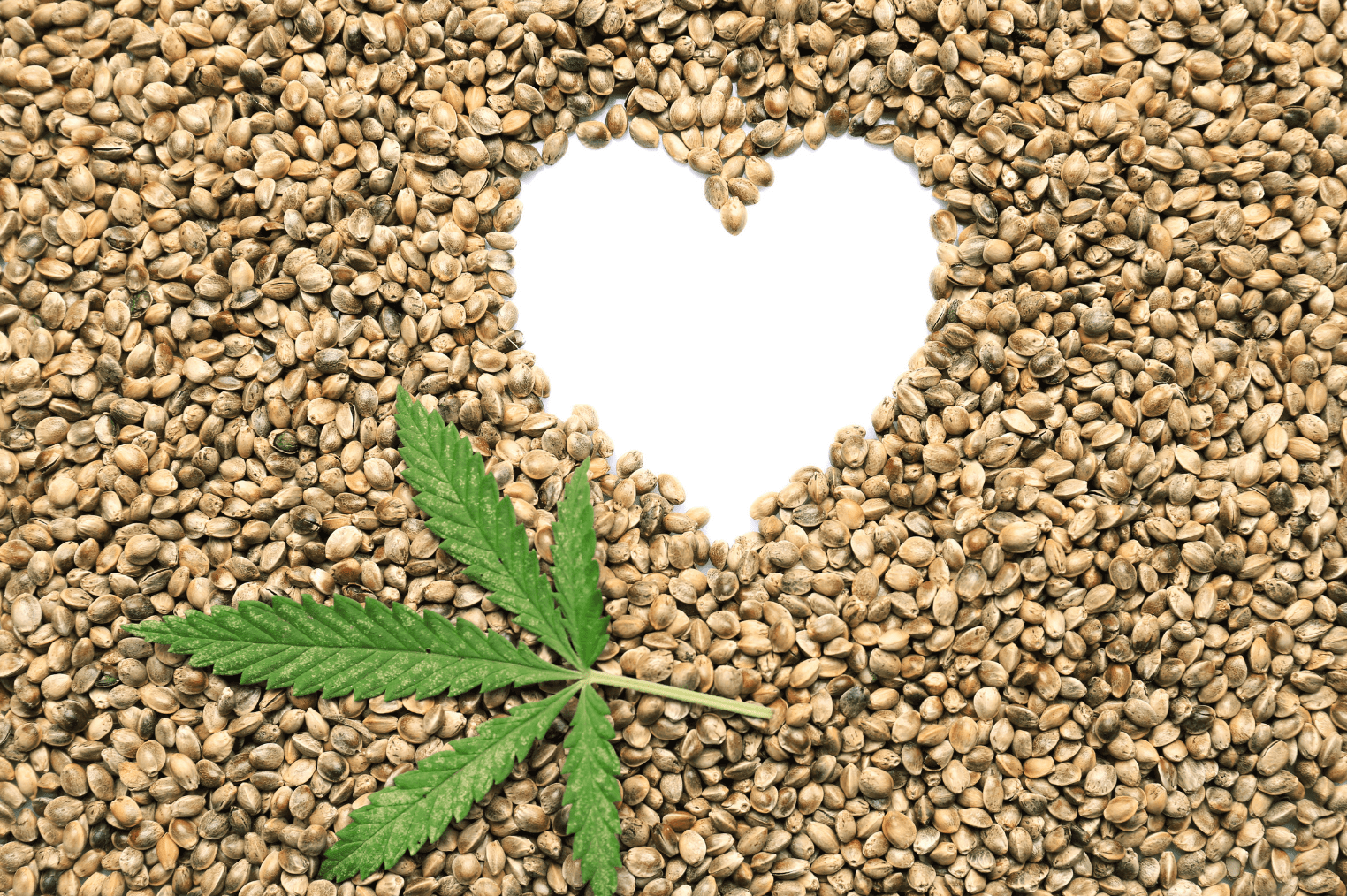 How to Choose the Right Hemp Seeds 3