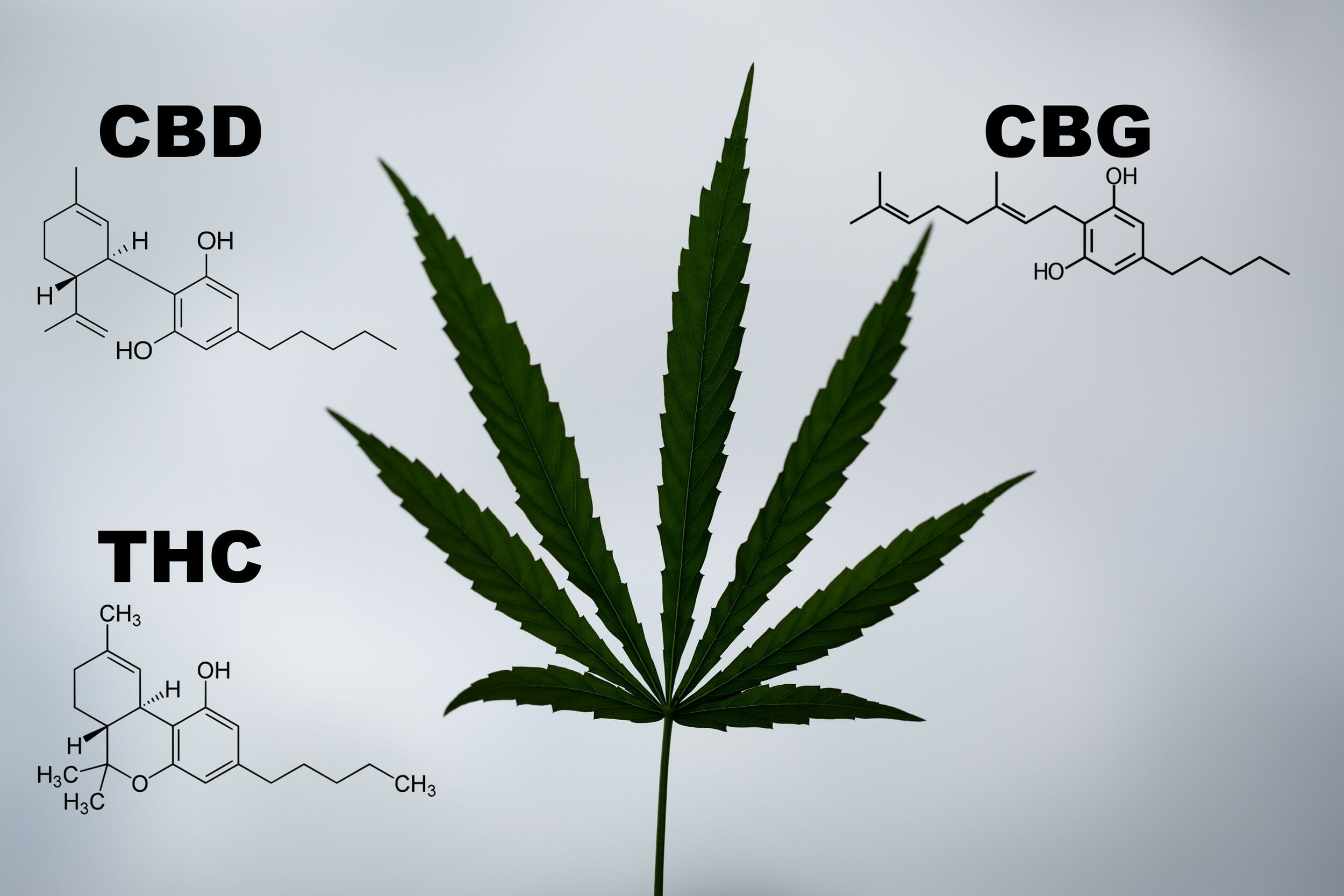 What Is CBG And Can It Compete With CBD? 2